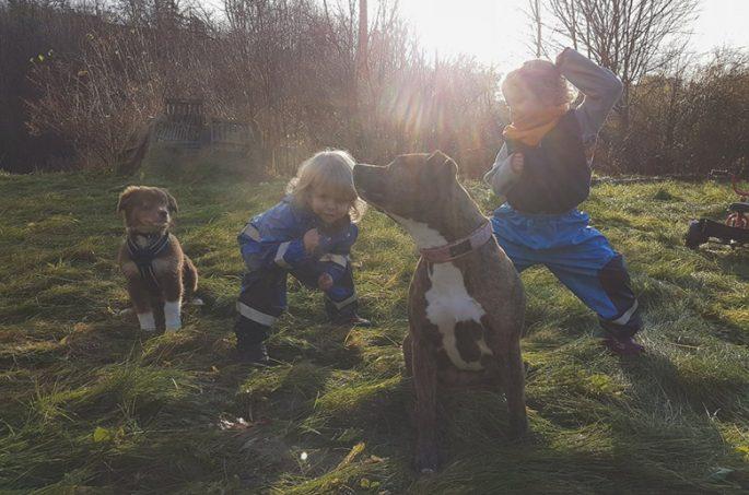 Max, Sebastian och hundarna ute på en gräsmatta