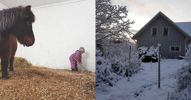 Max hjälper till i stallet och hus i vinterlandskap