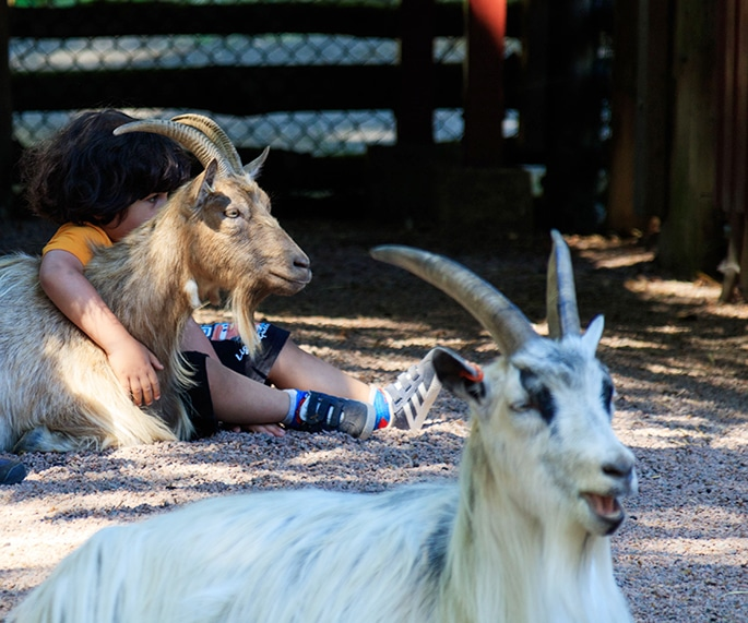 Tristan sitter och kramar en get på Barnens zoo