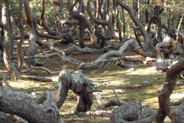 Naturum Trollskogen